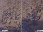 깜짝 놀랄만한 엄청난 양의 안양천 물고기떼 광경