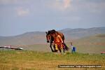 2010 몽골나담 경주마 대회 Наадам-2010 хурдан морины уралдаан