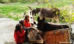 당나귀와 교감, 혹은 소통하는 아이들