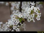영덕군 지품면 삼화리의 복사꽃과 봄꽃들....