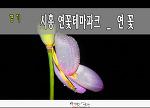 시흥 연곷테마파크 (관곡지)