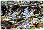 사월 산에서 보는 예쁜 야생화 현호색