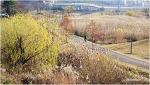 아직도 가을이 한창인 낙동강변