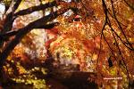 가을 붙잡기(1)