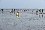 몽산포 해수욕장 조개 잡는 풍경