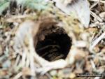 스페인 고산, 산책 중 발견한 굉장히 무서운 '이것'