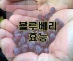 9월 제철음식 블루베리효능과 먹는방법
