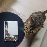 거실의 사자, 먹이사슬의 최상층 고양이.