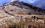 민둥산억새꽃축제와 더불어 타임캡슐공원과 백두대간생태수목원 여행코스