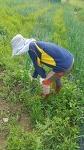 친환경 유기농 마늘 양파
