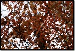 가을색을 찾으러...<방태산 출사 후기>
