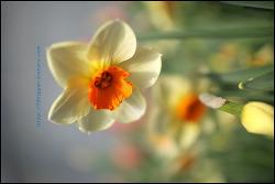 봄향기가 물씬 꽃들!!.....세계꽃 식물원....