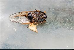 곤충 - 29 (잠자리, 나비, 벌, 풍뎅이, 매미)