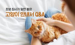 고양이를 처음 키운다면? 초보 집사가 알면 좋은 고양이 안내서 Q&A