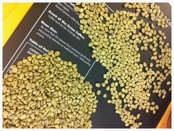 케냐 AA 오타야 이챠마마, Kenya AA Othaya Ichamama - 샘플로스팅(sample roasting)