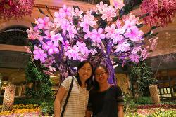 벨라지오 실내정원(Bellagio Conservatory & Botanical Garden) 2016년 봄의 일본풍 꽃장식 구경