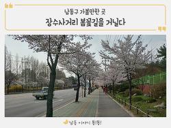 남동구 가볼만한 곳! 장수사거리 봄꽃길