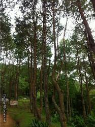 [여행기]피부에 양보하는 산림욕 방콕을 떠나라~~~
