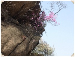 스마트폰 카메라 줌으로 당겨찍은 단풍나무