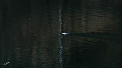한강 반영이 준 그림 그 그림을 담은 500mm 장망원 그리고 그 빛