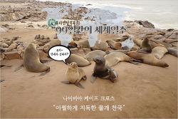 아찔한 경험, 나미비아 케이프 크로스 물개 보호구역(Cape Cross Seal Reserve)을 가다!