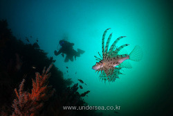 Soft Coral & Lionfish , Jeju Island, Korea
