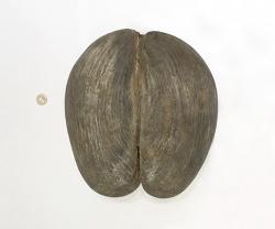 세상에서 가장큰 씨앗