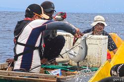 인도네시아 참치 낚시, 차라리 상어와의 사투가 나았다(마지막회)