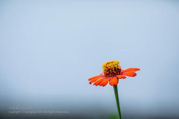 비 그친 후 꽃
