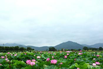 비 내리는 경주 첨성대, 연꽃들과 함께하는 여름여행