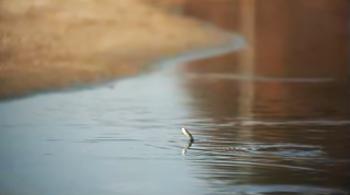 강과 생명 (2부작)