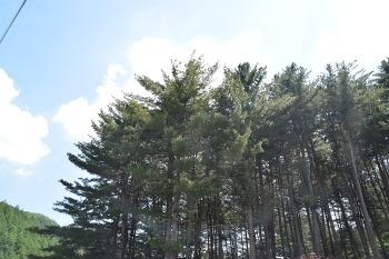 가평 푸른숲캠핑장 후기