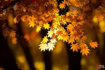 가을이 그리워질 계절 겨울