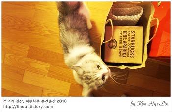 [적묘의 고양이]친구네 먼치킨 짤뱅이 동생,고양이 이중유리잔,한정판,별다방,캣핸들 글라스