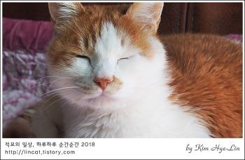 [적묘의 고양이]19살 묘르신, 눈이 번쩍 뜨이는 이유, 간식을 주는 이유