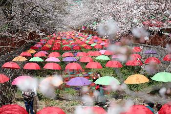 봄의 시작을 알리는 제56회 진해군항제 개막!! (진해여행/진해명소)