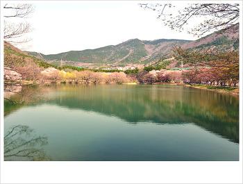 진해 내수면 생태공원과 경화역...♥♡♥