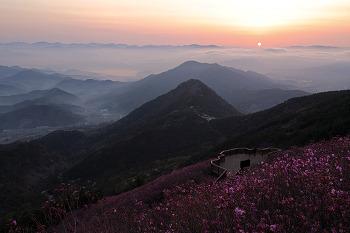 미리가본 제23회 천주산 진달래 축제장에서 즐긴 일출과 운해! (창원명소)