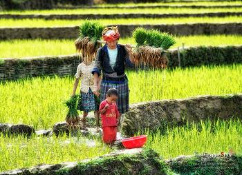 베트남(풍경+인물)...5