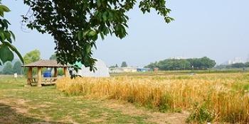 수원시 주말농장 <당수동 시민농장>
