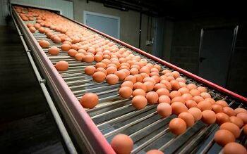 유럽 계란 살충제 달걀 코스트코 판매제품은??