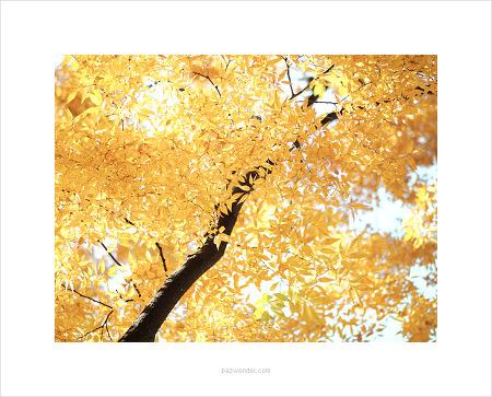 [E-M5 Mark2] 투명한 가을빛