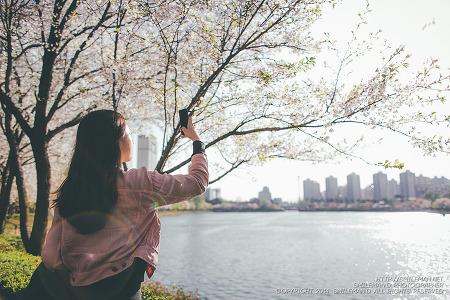 140406 롯데월드 석촌호수 벚꽃 나들이