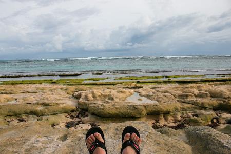 판다와 해변의 기억