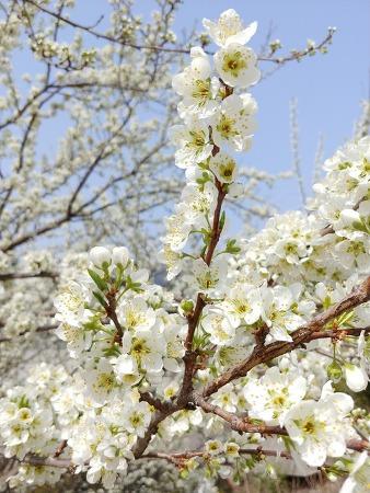 무심삼매와 사홍서원