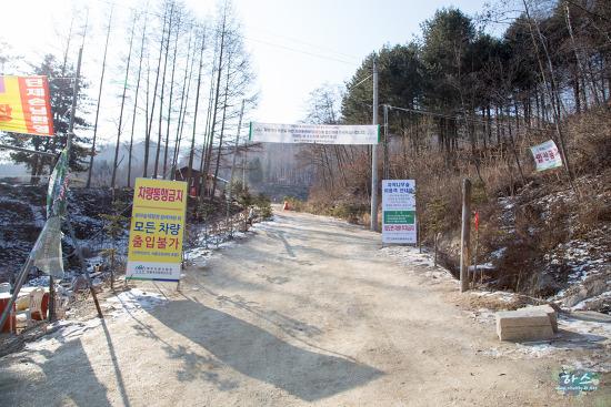 2016.1.26 강원도 원대리 눈내린 자작나무숲