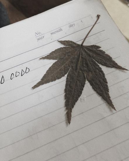 할머니 단풍잎