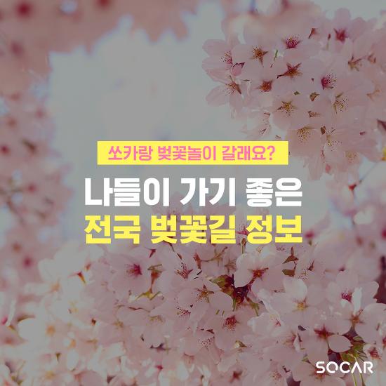 쏘카랑 벚꽃 놀이 갈래요? 봄 맞이 전국 벚꽃길 일람!