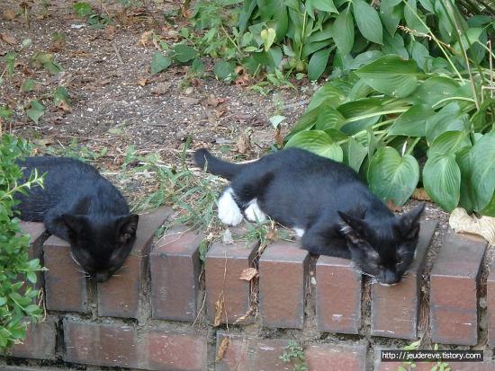 새끼 고양이들이 화단에 나타났다!