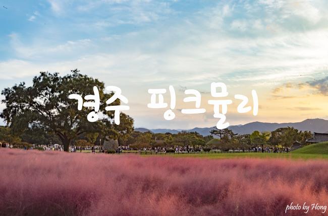 [경주 여행] 색다른 분홍빛 가을맞이 경주 핑크뮬리